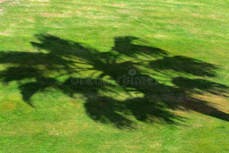 Um molde abstrato bonito da sombra por uma palmeira tropical no fundo de uma grama verde suculenta e fim-colhida foto de stock