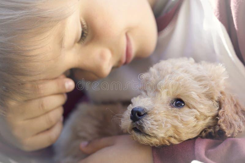 Um momento mágico da doçura entre um cachorrinho de um homem e um cão de cachorrinho fotos de stock