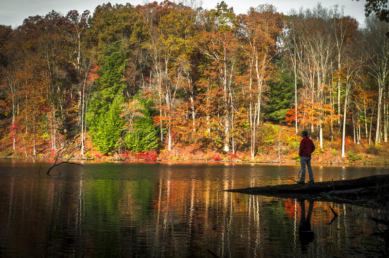 Um momento solitário em Rose Lake em montes de Hocking na queda fotografia de stock royalty free