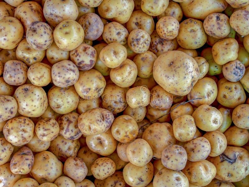 Um montão de batatas amarelas fotos de stock