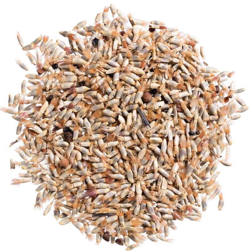 Um montão de sementes da qualidade do cantaurea, flor para seu jardim adorável imagem de stock royalty free