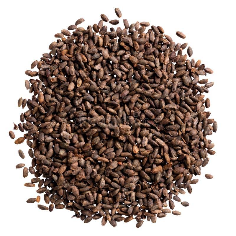 Um montão de sementes da qualidade do salvia, flor para seu jardim adorável imagens de stock