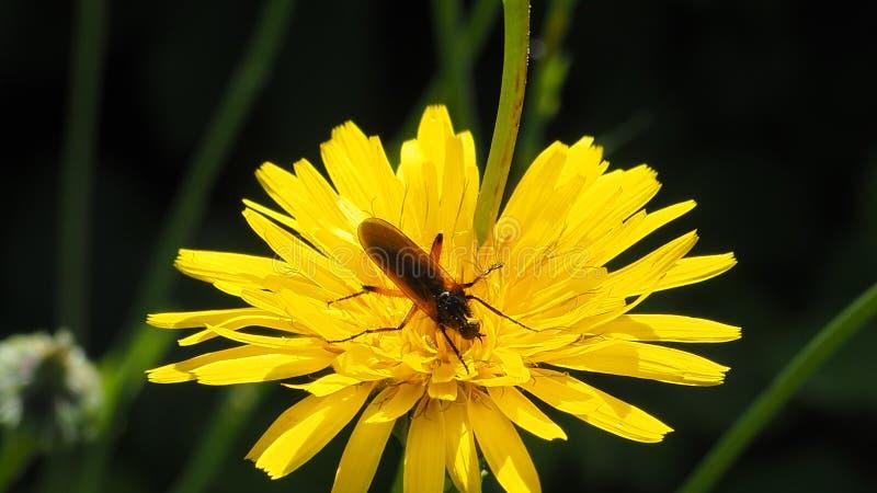 Um mosquito em uma flor fotos de stock