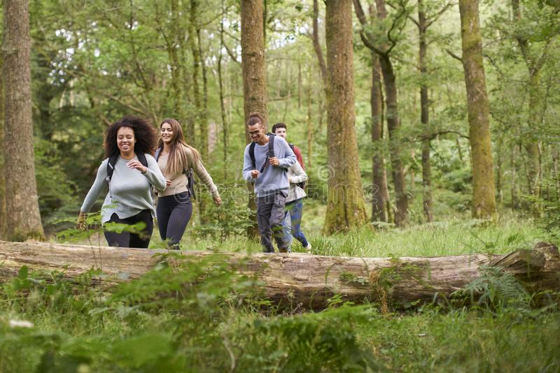 Um multi grupo étnico de cinco amigos adultos novos que andam em uma floresta durante uma caminhada imagens de stock