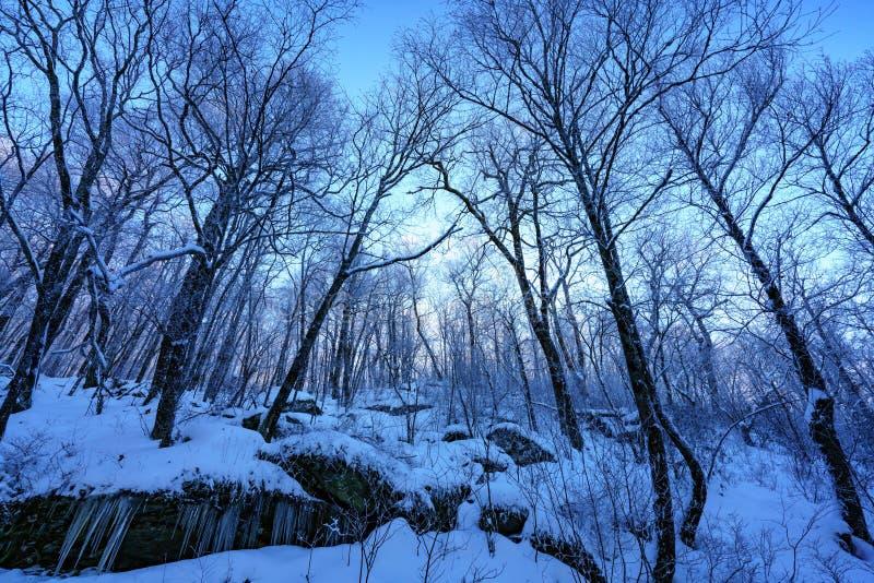 Um mundo congelado no crepúsculo foto de stock