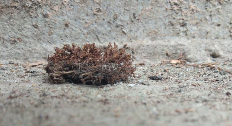 Um musgo secado na terra imagens de stock
