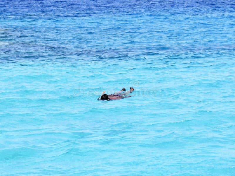 Um nadador preto nada pelo mar e caça peixes comendo peixes fotos de stock royalty free