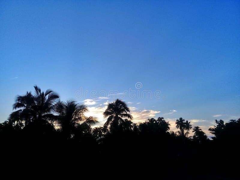 Um nascer do sol bonito atrás das palmeiras fotos de stock royalty free