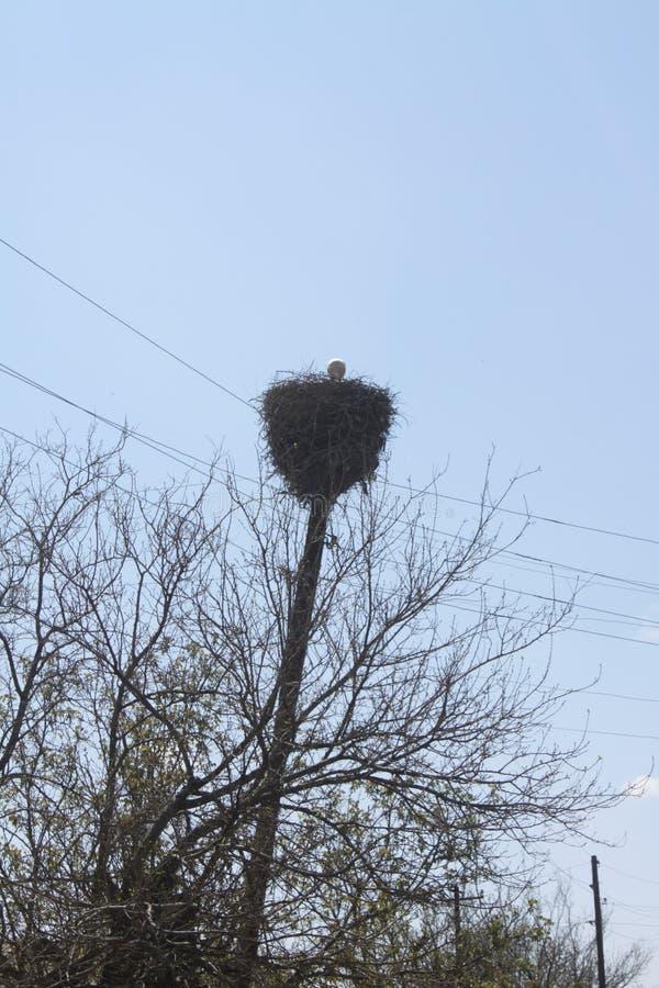 Um ninho de uma cegonha p02 imagens de stock royalty free