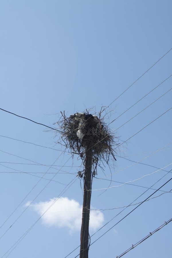 Um ninho de uma cegonha p03 fotos de stock royalty free
