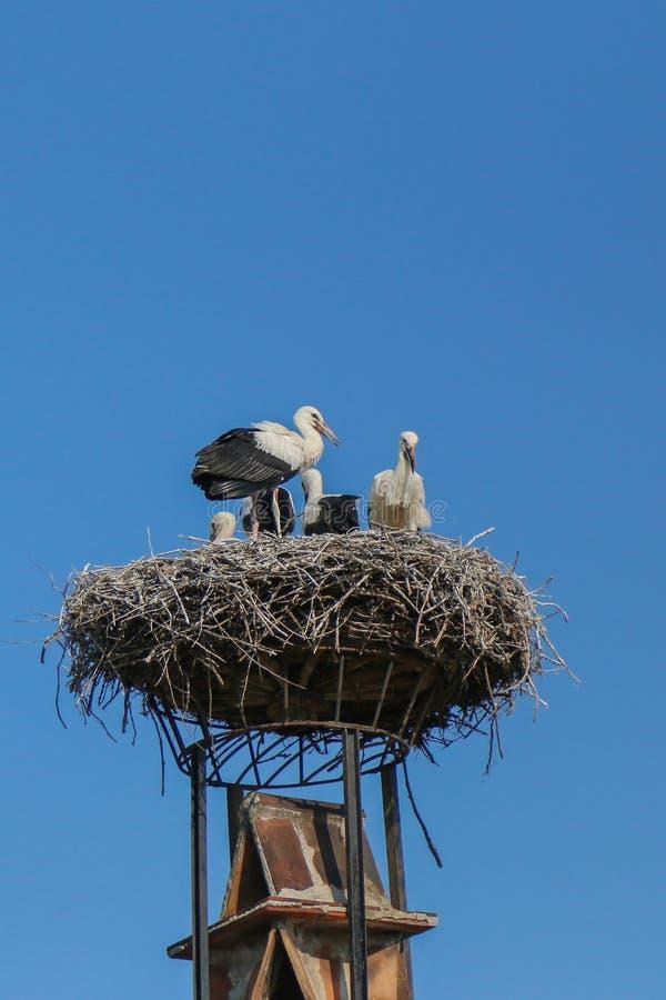 Um ninho grande de pássaros da cegonha sobre o telhado em Áustria foto de stock