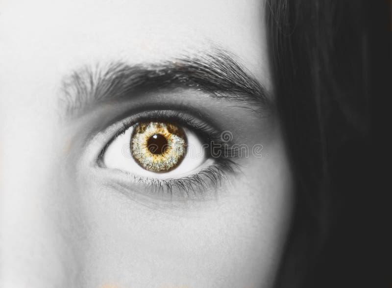 Um olho perspicaz bonito do olhar Feche acima do tiro fotografia de stock