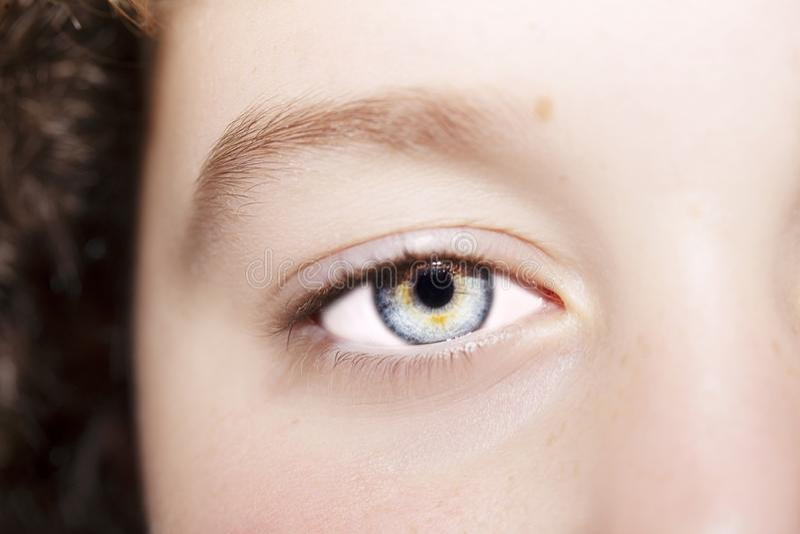 Um olho perspicaz bonito do olhar Feche acima do tiro fotografia de stock royalty free