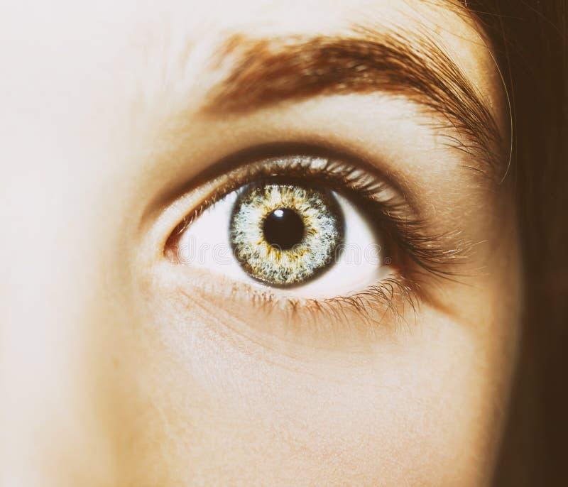 Um olho perspicaz bonito do olhar Feche acima do tiro foto de stock royalty free