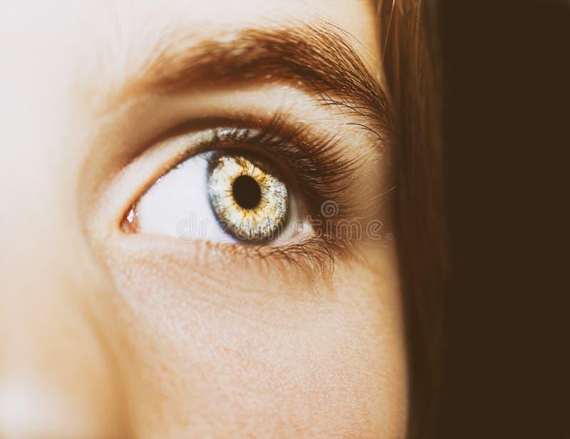 Um olho perspicaz bonito do olhar Feche acima do tiro imagem de stock royalty free