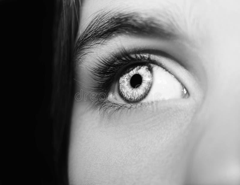 Um olho perspicaz bonito do olhar Feche acima do tiro fotos de stock royalty free