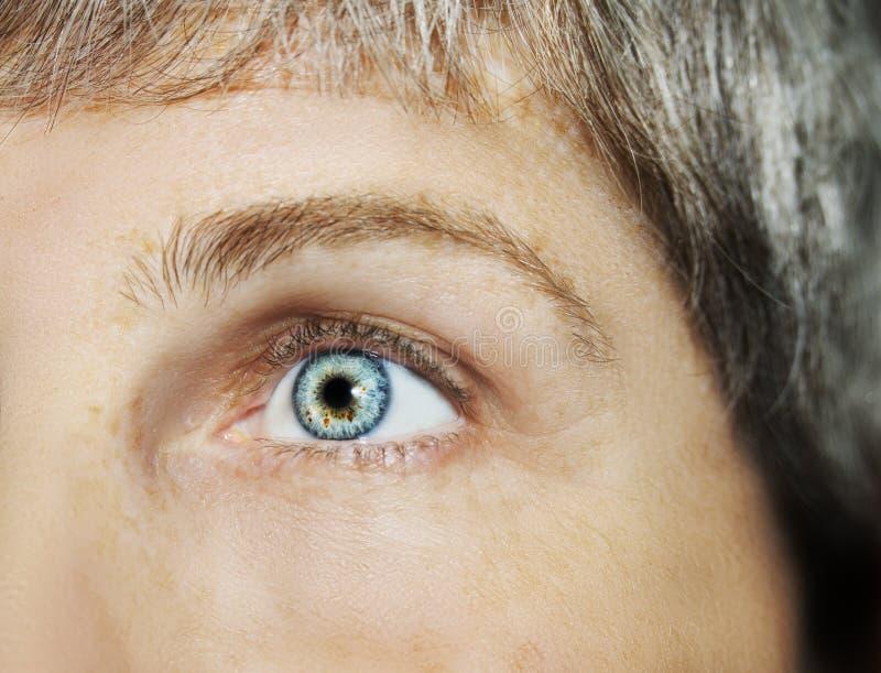 Um olho perspicaz bonito do olhar Feche acima do tiro O olho de uma mulher idosa fotos de stock