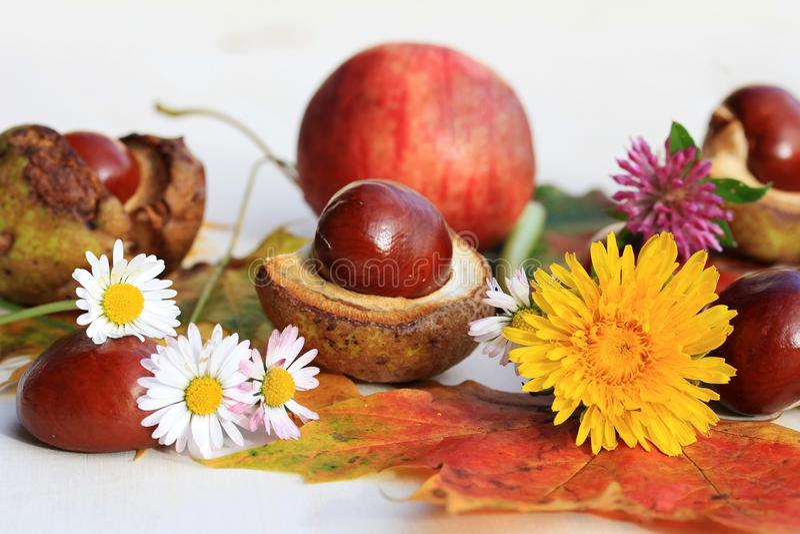Um outono colorido com flores, castanhas e maçãs imagens de stock