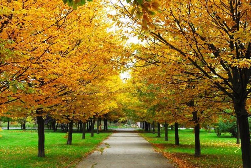 Um outono da aléia imagens de stock
