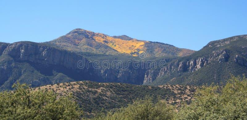 Um outono da montanha de Huachuca imagens de stock royalty free