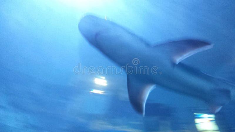 Um outro PIC do tubarão imagens de stock royalty free