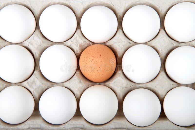 Um ovo branco em uma caixa dos ovos brancos foto de stock