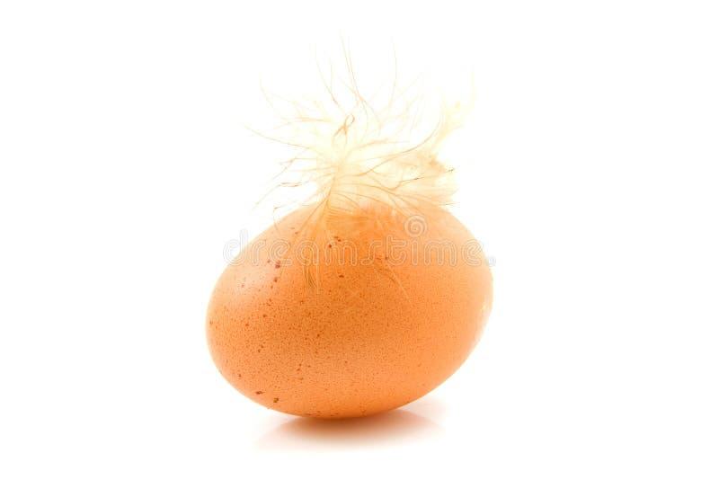 Um ovo da galinha com pena fotos de stock royalty free