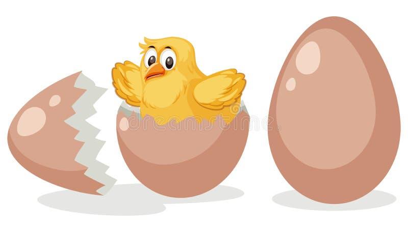 Um ovo de choque do pintainho ilustração stock