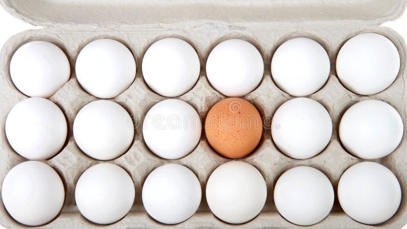 Um ovo marrom em uma caixa dos ovos brancos isolados no branco imagem de stock royalty free