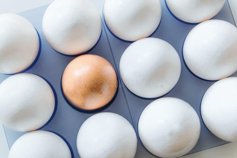 Um ovo marrom no meio dos ovos brancos imagem de stock royalty free