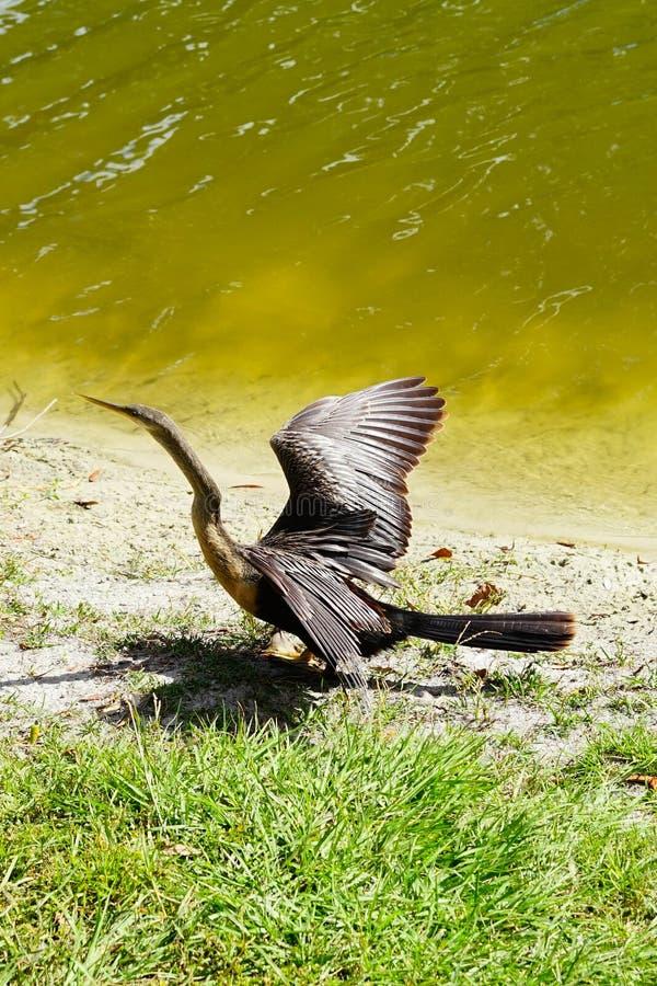 Um pássaro é prepara-se para voar imagens de stock