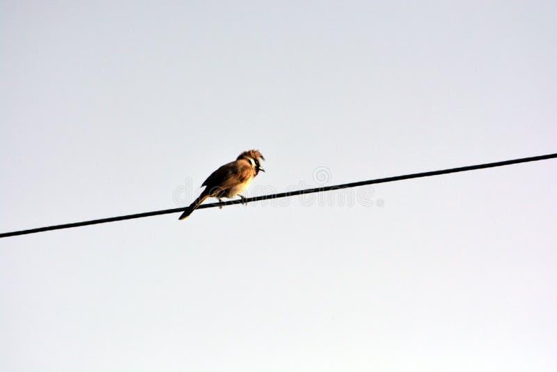 Um pássaro bonito que senta-se no fio foto de stock royalty free