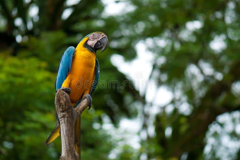 Um pássaro colorido fotos de stock royalty free