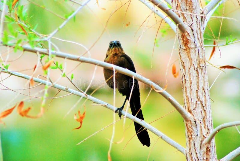 Um pássaro em uma árvore que mantém o relógio imagem de stock royalty free