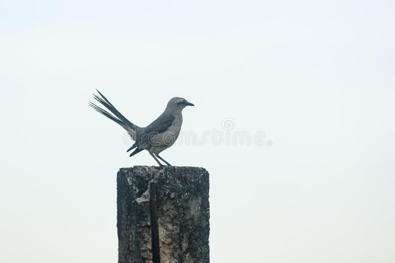 Um pássaro em uma cerca fotografia de stock