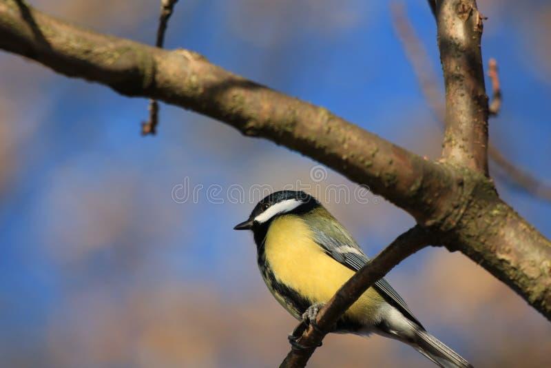 Um pássaro em uma filial foto de stock