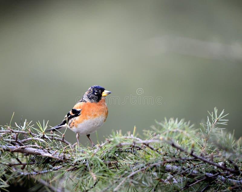 Download Pássaros imagem de stock. Imagem de alimento, verde, olhar - 29842043