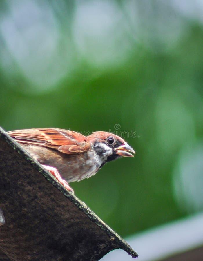 Um pássaro nervoso fotografia de stock