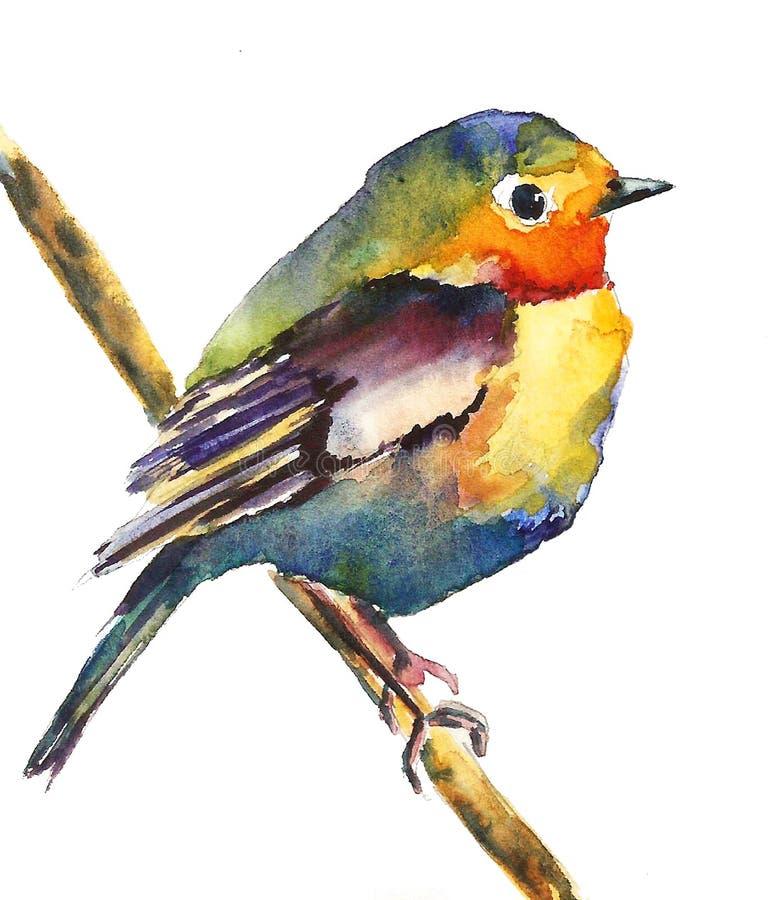 Um pássaro pequeno, brilhante senta-se em um ramo, fundo isolado, aquarela, gráficos ilustração royalty free