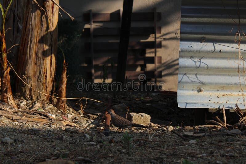 Um pássaro pequeno da vila fotografia de stock