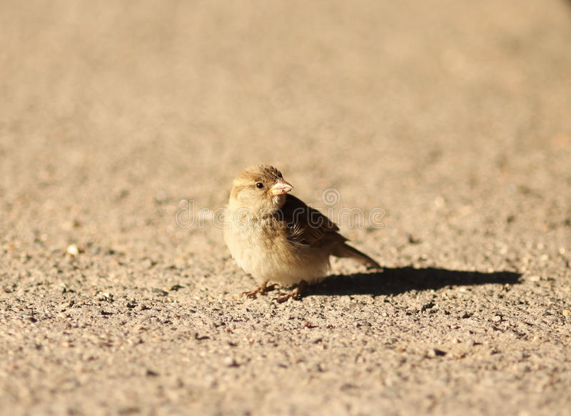 Um pássaro pequeno em uma areia fotografia de stock royalty free