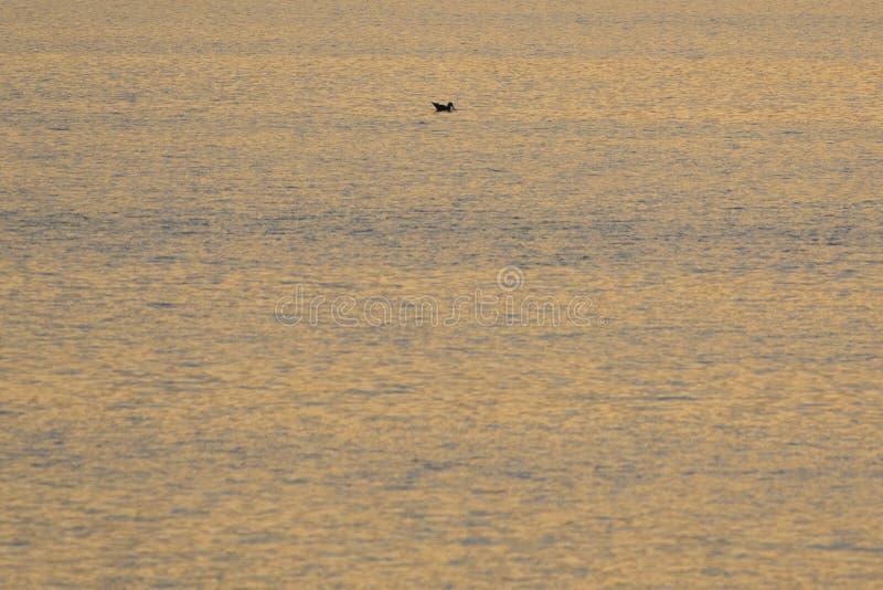 Um pôr do sol dourado sobre um lago na área de Milicz imagens de stock royalty free