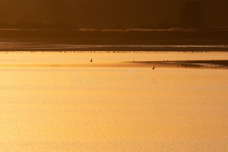 Um pôr do sol dourado sobre um lago na área de Milicz fotos de stock