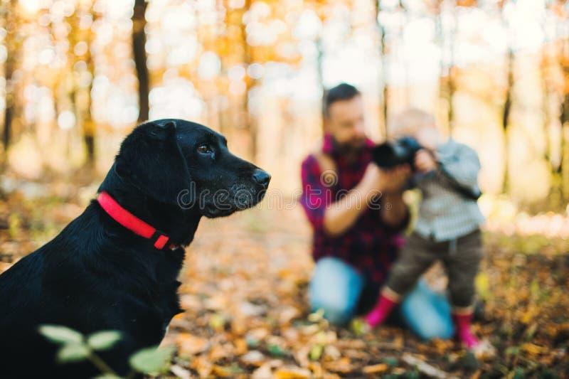 Um pai com um filho da criança em uma floresta do outono, tomando a fotografia de um cão imagem de stock