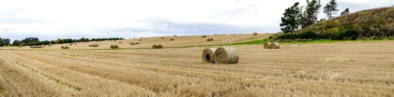 Um panorama do grande campo com blocos múltiplos do feno rolado no campo de Aberdeenshire, Escócia fotografia de stock royalty free