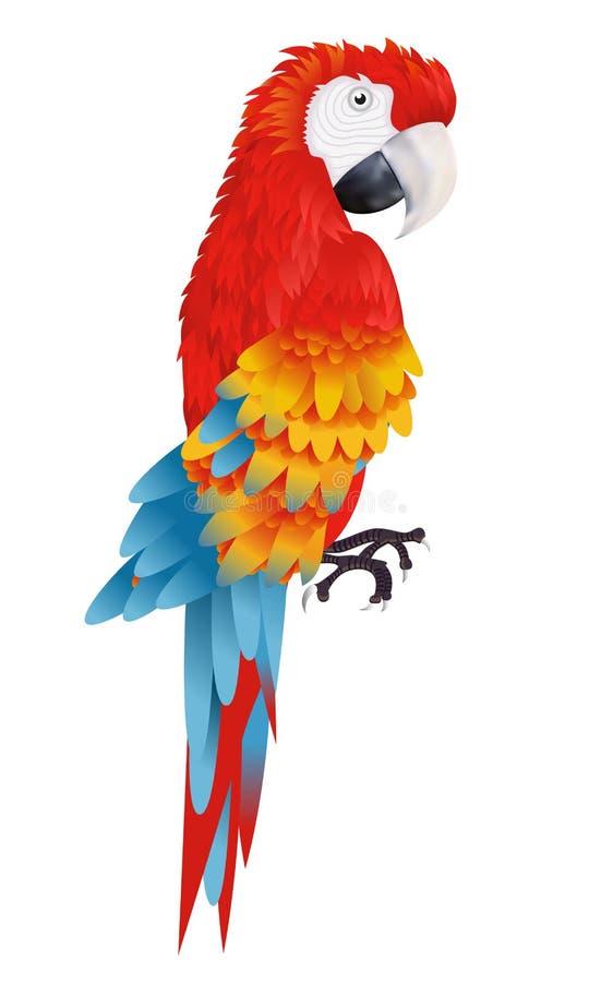 Um papagaio brilhante da arara no vetor branco do fundo ilustração stock