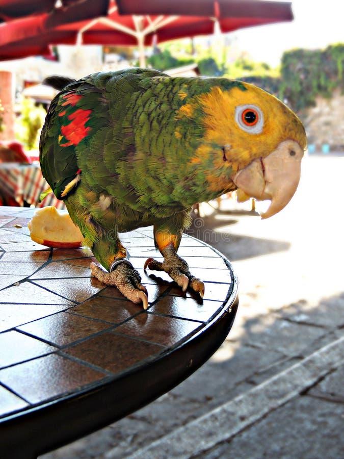 Um papagaio colorido fotos de stock