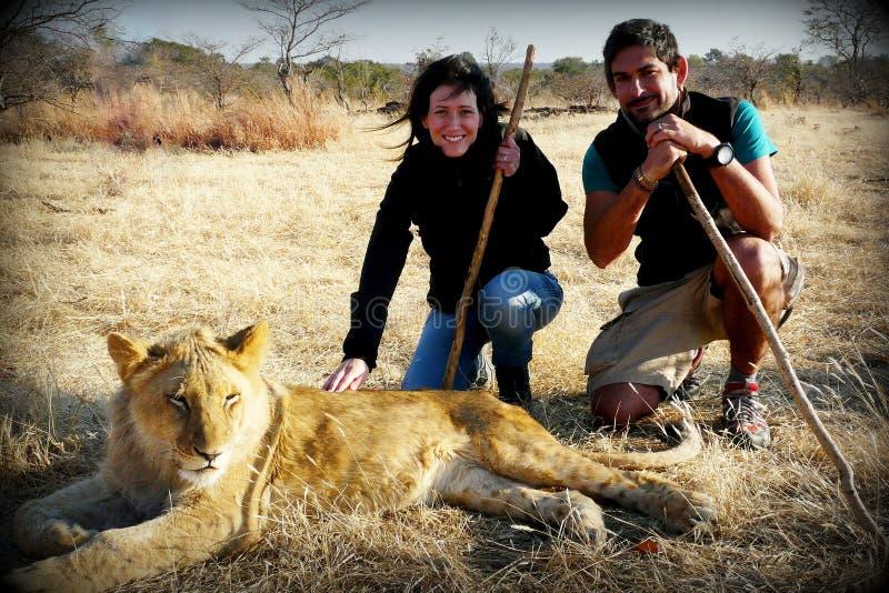 Um par adultos novos andam com os leões que contribuem a um programa local dos animais selvagens da reserva perto de Victoria Fal foto de stock