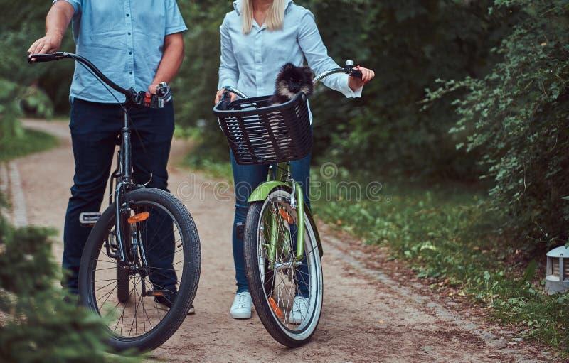 Um par atrativo de uma fêmea e de um homem louros vestiu-se na roupa ocasional em um passeio da bicicleta com seu spitz pequeno b fotos de stock