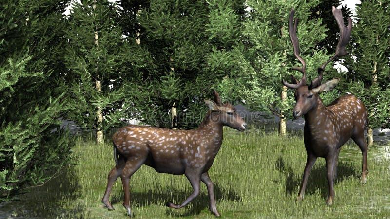 Um par bonito de cervos ilustração stock